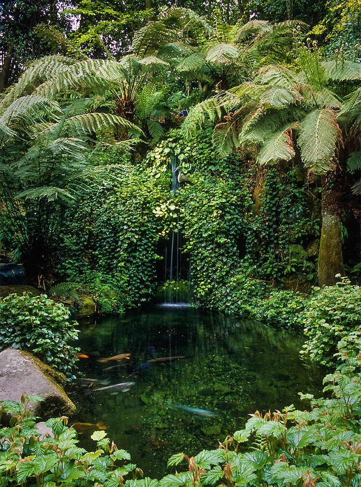 Water in English Gardens (21 of 33) |Trebah Gardens, Cornwall, England | by ukgardenphotos