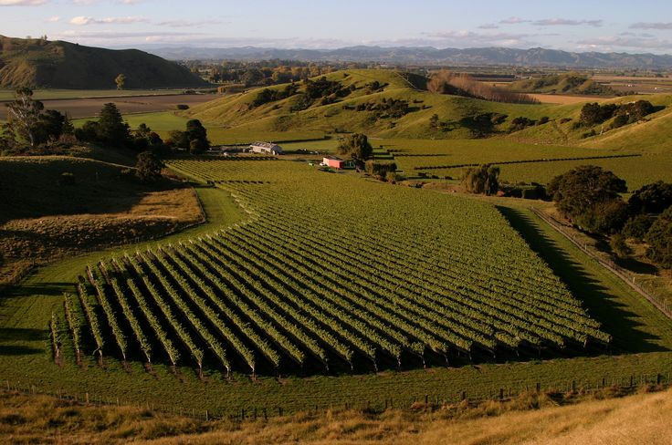 Gisborne Villa Maria Vineyard, Gisborne – New Zealand