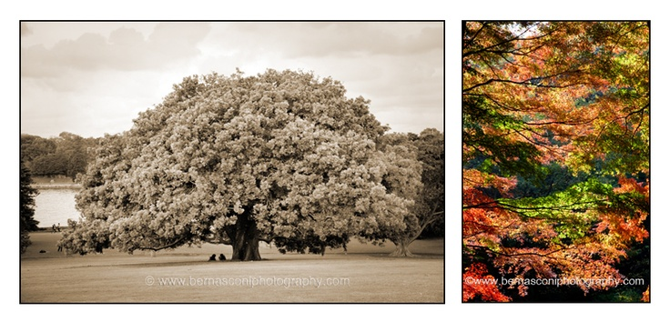 Its #Autumn in #Sydney #Australia at the moment  - my favourite time of the year  - and its beautiful.     As I drive around our city, all I've been doing is 'oohing' and 'aahing' over the colours of the trees during the change of seasons.    So it got me thinking about trees and how much I love them…their grandness, the way they 'change' through the seasons, the way they nourish the earth….  Whats your favourite season? by Christine Bernasconi www.bernasconiphotography.com