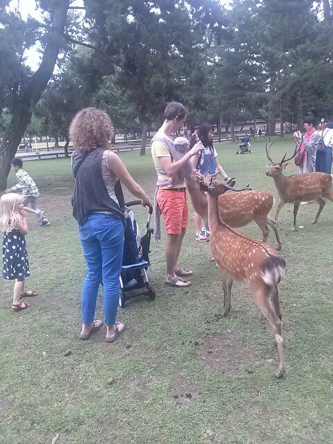 #nara #narapark #deer #奈良 #奈良公園 #鹿 さんおねだり成功