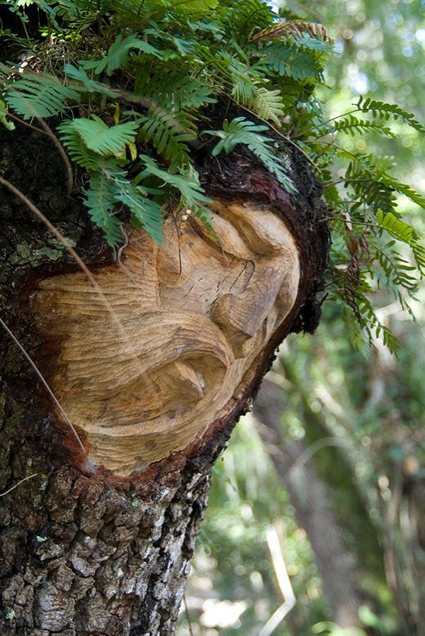 Tree spirit carvings wood pinterest