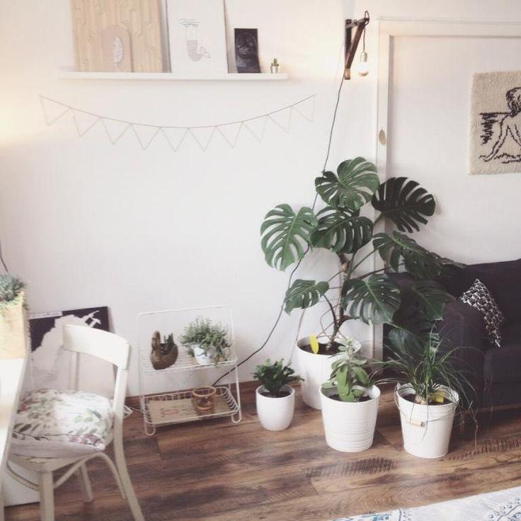 Grüne Pflanzen Sorgen Für Ein Gutes Raumklima Und Tun Der Seele Gut.  #Sommer #