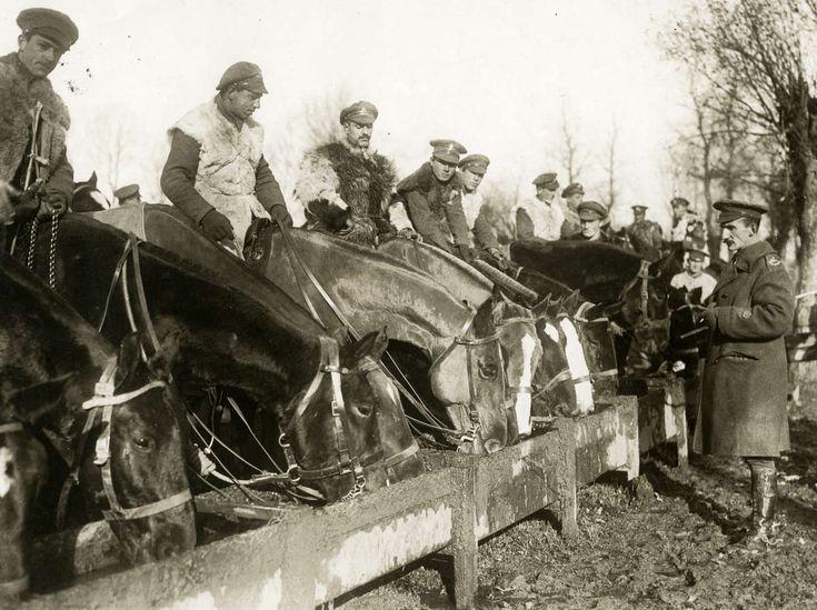 WWI, Canadian horsemen