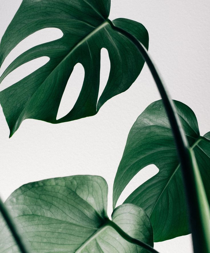 Best Cool House Plants - How To Care | From the classic swiss cheese plant to the asparagus fern, we've found the 7 house plants to  buy now and how to care for them #refinery29 http://www.refinery29.uk/house-plants-light