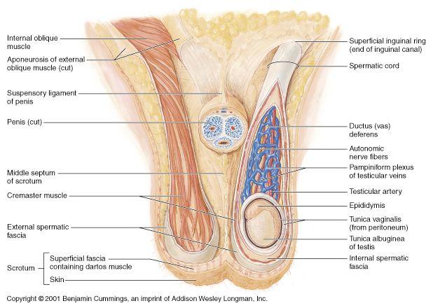 34 best reproductive images on pinterest