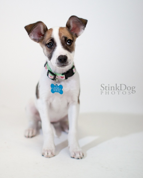 Maxfund Adopt Dog