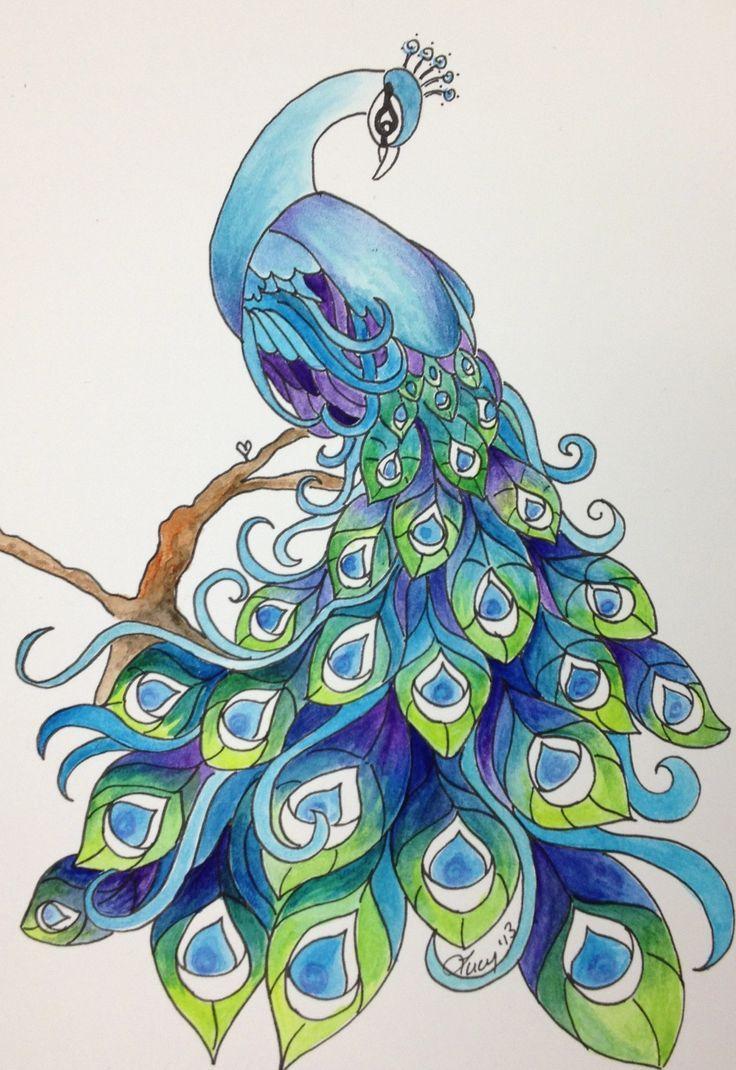 3e815c5bb0b82f83d26f3703083460a8 Jpg 736 1070 Peacock Drawing Peacock Art Peacock Painting