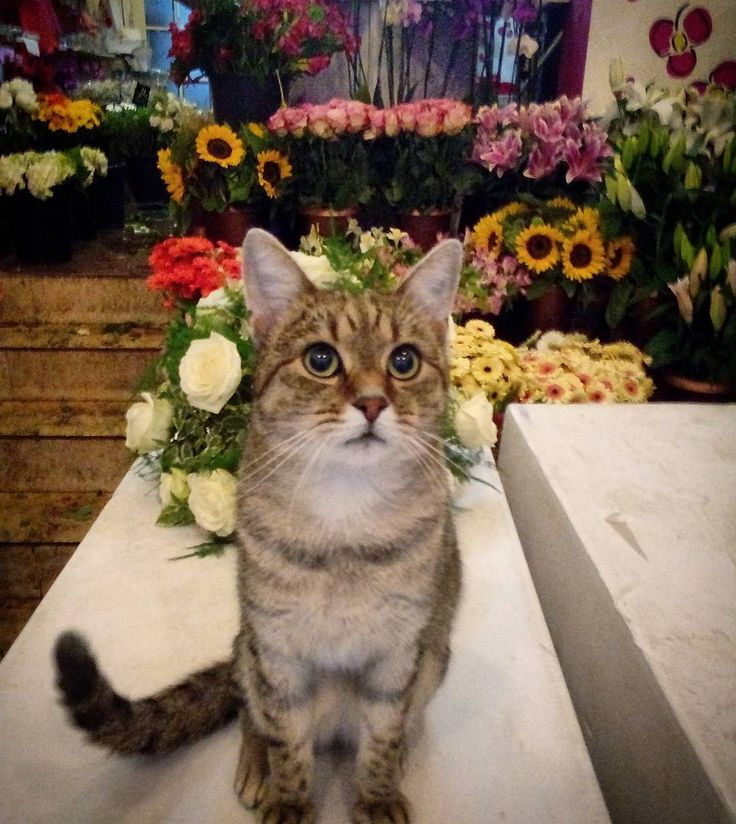 "132 aprecieri, 3 comentarii - Floraria Dorothy's (@florariadorothys) pe Instagram: ""Early in the morning... #catintheflowershop #working #grigore #catsofcluj #clujcats #napocats #cluj…"""