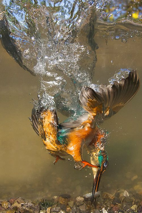 """ Flying underwater  by Marco Redaelli """