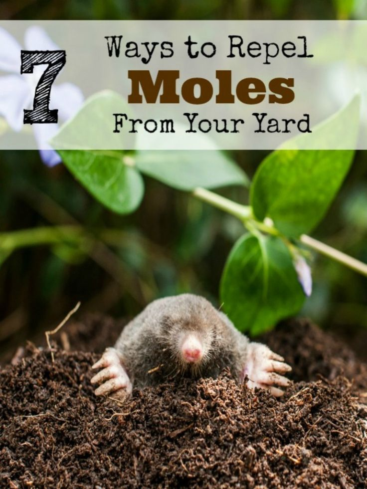 how to take care of a mole