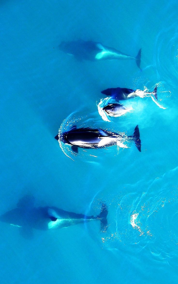 4961 best ~*~ Photography ~ Creatures of the Big Blue images on ...