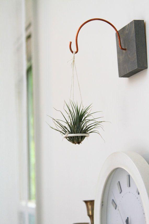 Plant Indoor Windows Holders
