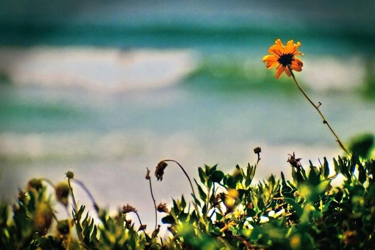 Beautiful photo by Matt Tolk Photography!