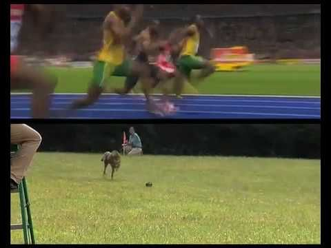 Usain Bolt vs a cheetah; rate, etc. Like to see a real position vs time for Bolt.