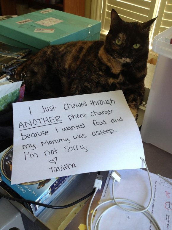Cat Shaming | Tags: Cats , Cat Friday , cat shaming