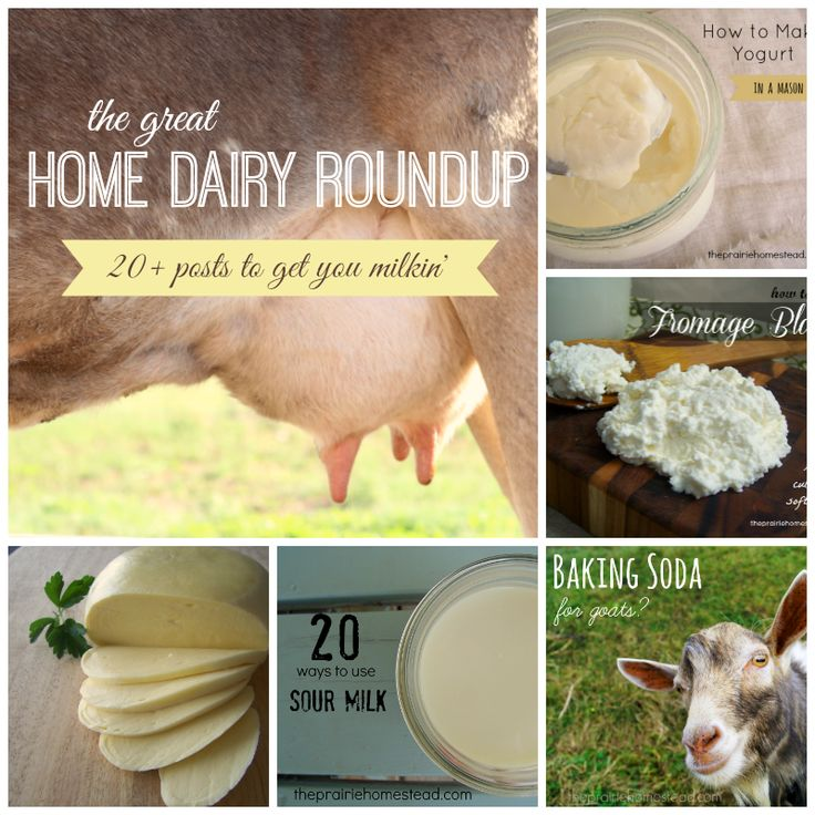 The Great Home Dairy Round-Up (20+ posts to get you milking!) | The Prairie Homestead