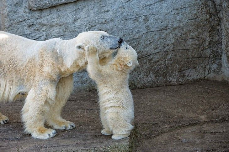 There is no relationship bigger than that between mother and child, and this is so beautifully illustrated by these wild bears. Prepare for cuteness!