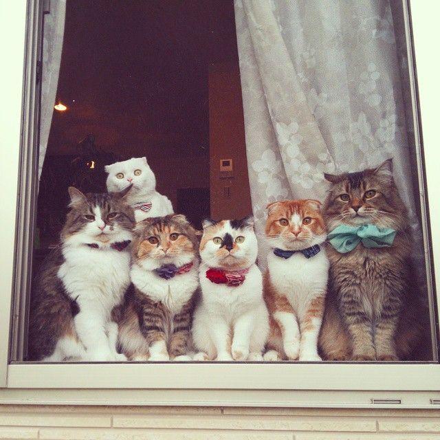 """* * WHITE CAT IN BACK: """" Don'ts sit in de window lookin' likes foolz wif dem bowties !! """""""