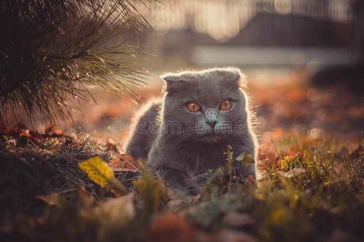 Cat. Sitting on a grass on autumn day , #Affiliate, #Sitting, #Cat, #grass, #day,