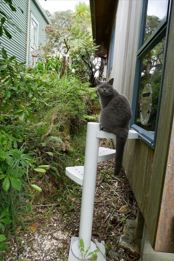 Access to an elevated cat door.