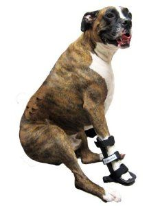 11 Best Images About Colt On Pinterest Wheels Your Dog