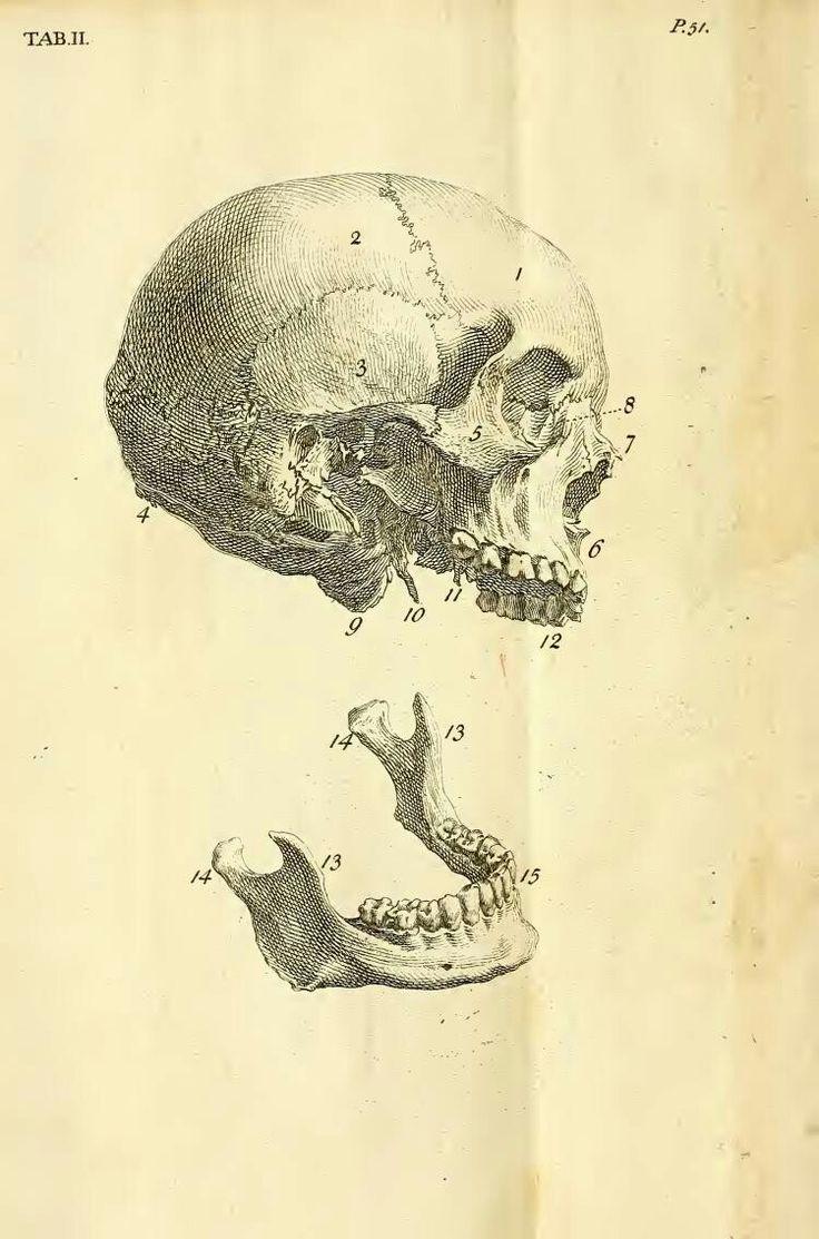 Antique Medical Scientific Illustration Highresolution