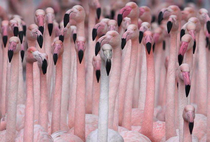 flamingos...makes me smile