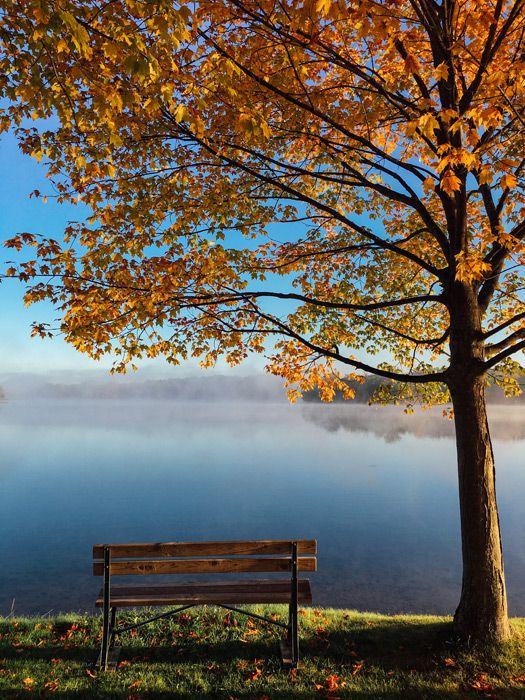 フリー写真 霧がかかる湖と紅葉した木とベンチのある風景