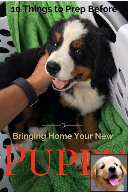 Dog Behavior Specialist Virginia Beach And Dog Behavior