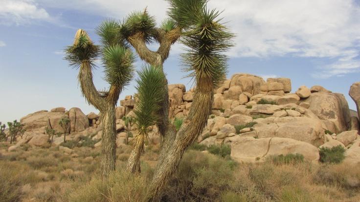 parchi nazionali della california