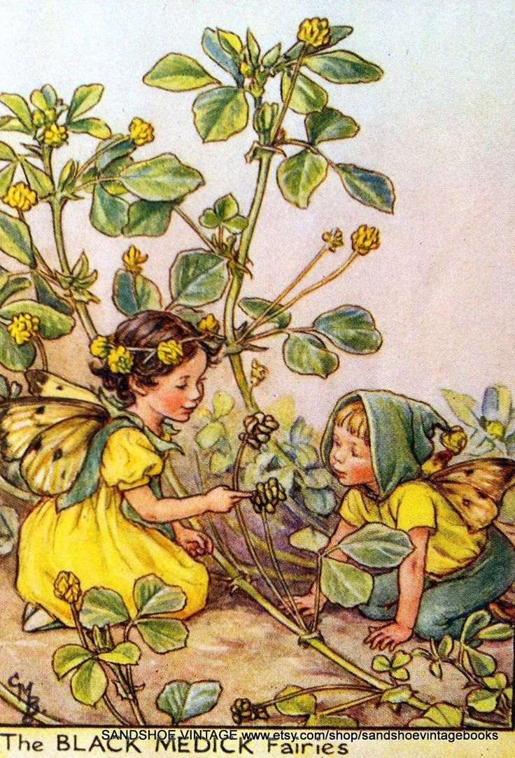 1930s BLACK MEDICK FAIRIES Cicely Mary Barker Print Ideal for Framing. $6.00, via Etsy.