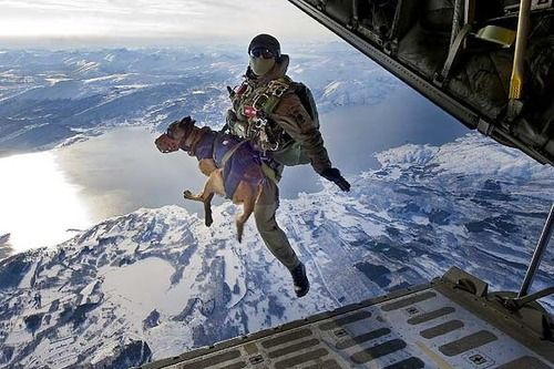 Troops with K9 jumping into Afghanistan. THAT shows how much dogs love and trust us. We are not worthy....