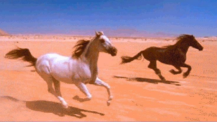 Гифка лошади бегут, дню