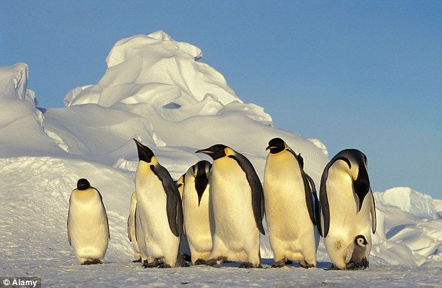 Researchers there had sequenced genomes from Adelie and emperor penguins and could not find some of the taste genes.