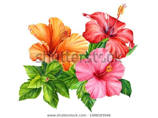 Hibiscus Painting Flowers In 2020 Flower Painting Hibiscus Drawing Flower Illustration