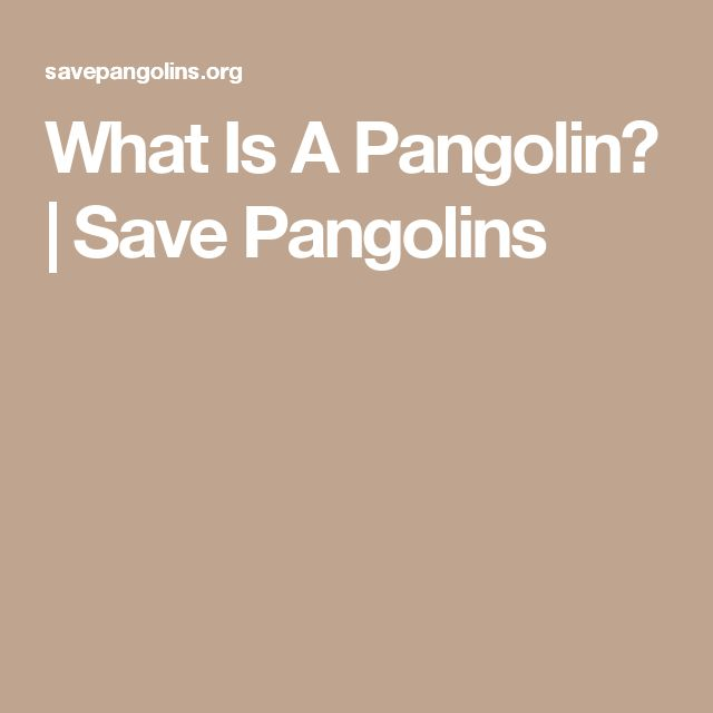 What Is A Pangolin? | Save Pangolins