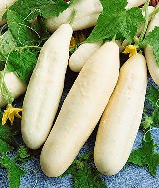Klisaz Shop (Unique acessories and rare seeds): Jual benih/bibit/seeds Slicing White Cucumber Seed...