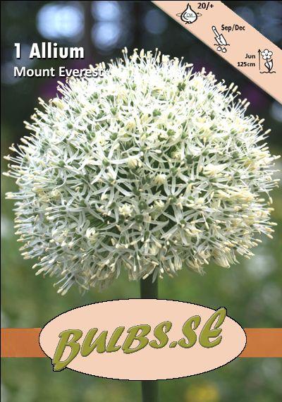 Allium Mount Everest 70064.jpg (400×570)