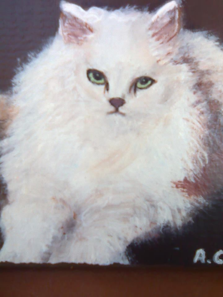 il gatto