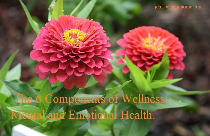 The 6 components of wellness: mental and emotional health.