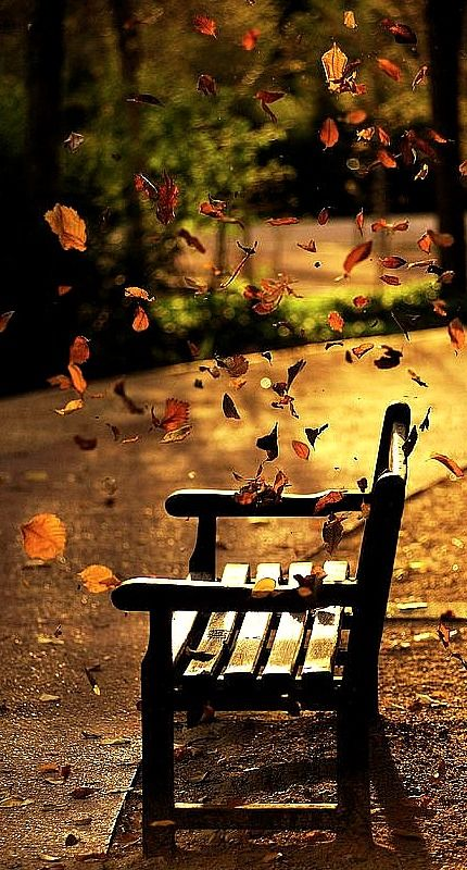 To sit and relax awhile watching the autumn leaves falling- peace, calm and serenity .......