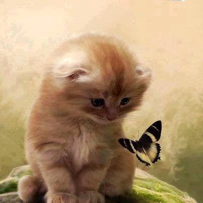 Hello, little butterfly.