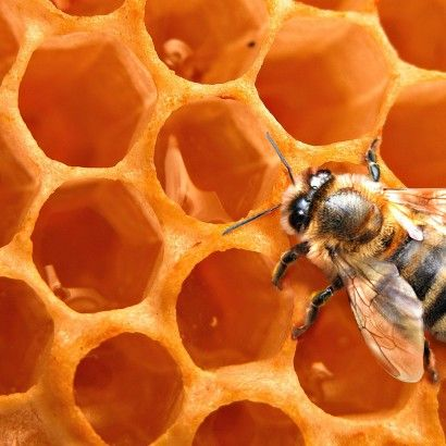 For more interesting information about honey follow the BeeNuts Blog