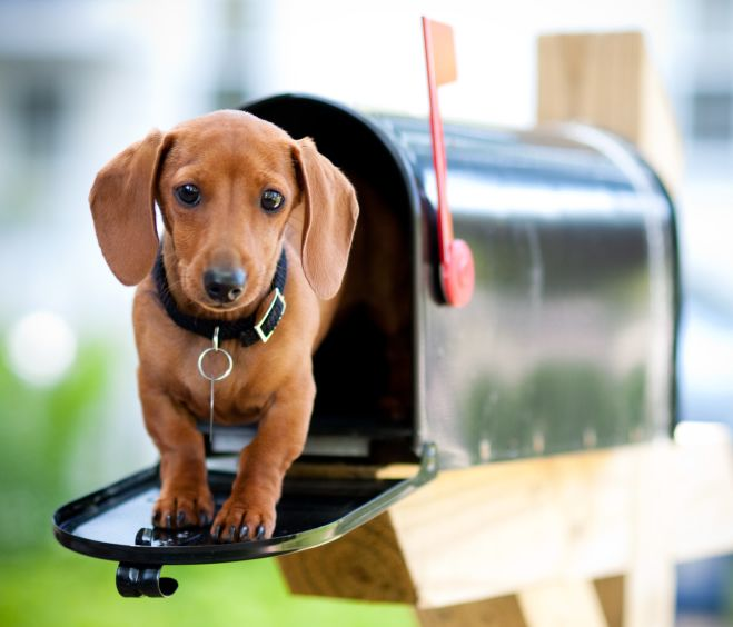 Special Delivery!: Dachshund Mail, Weenie Dogs, Doxi, Pet, Cuti, You'V Got Mail, Weiner Dogs, Special Delivery, Mail Boxes