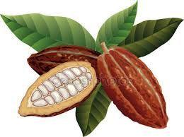 Resultado de imagen para cacao dibujo