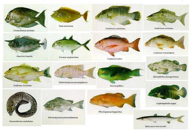 A balatoni halak napja - Világnapok - Emléknapok - Jeles napok