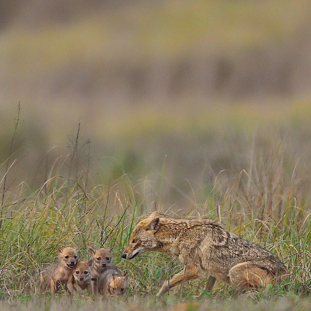 ✩ Mom and babies  Beautiful picture | Photography by @varun.aditya , Tag #AnmlLife to be featured
