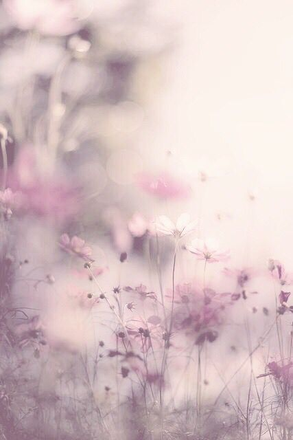 """~Spring Pirouettes~ """" . . . but only in the spring you dream and want no other season but the spring!"""" ~ Mehmet Murat ildan"""