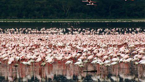Lake Nakuru National Park  http://kws.go.ke/parks/parks_reserves/LNNP.html