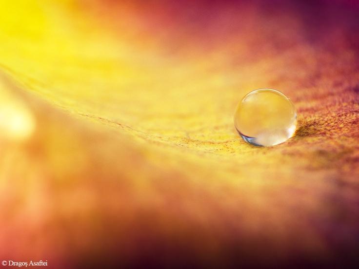 One of my best macro photos. :)